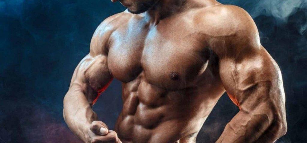 Epicatechin bodybuilding