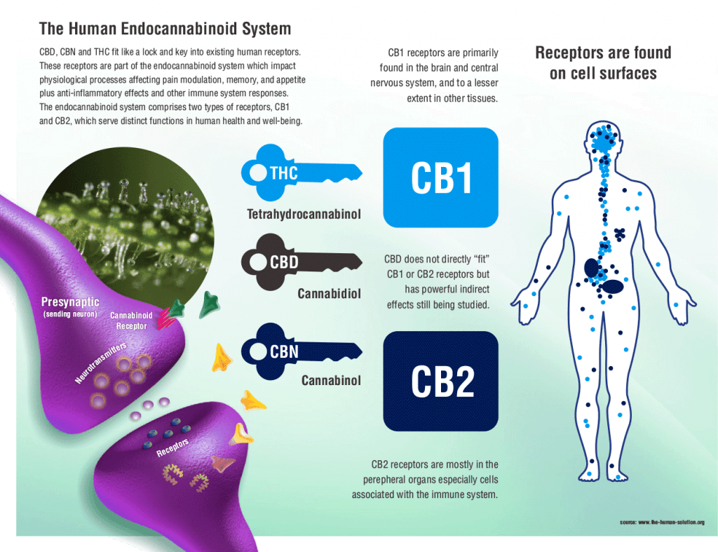 How-Does-Cbd-Oil-make-you-feel