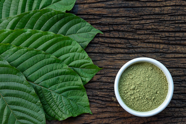 Kratom Strains 101 The Great Effects Of Different Strains