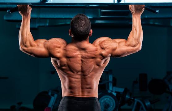 Prohormones bodybuilding